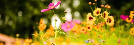 Ormai è certo l'estate ci rende più felici, merito del sole e la luce che favoriscono la produzione di serotonina, sostanza che provoca una sensazione di benessere...